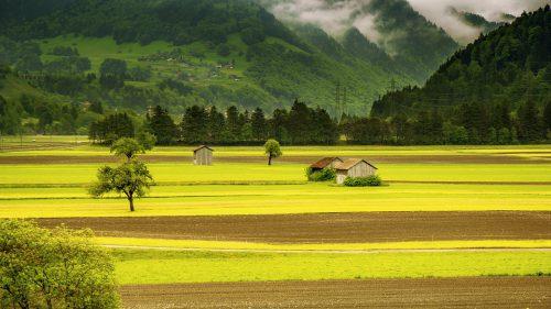 groen voor innerlijke rust, balans en ontspanning